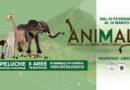Animals: a Etnapolis la mostra con i peluche